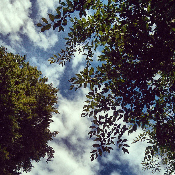 #trees and #sky