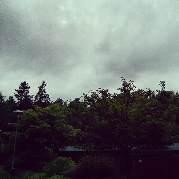 #sky #forrest