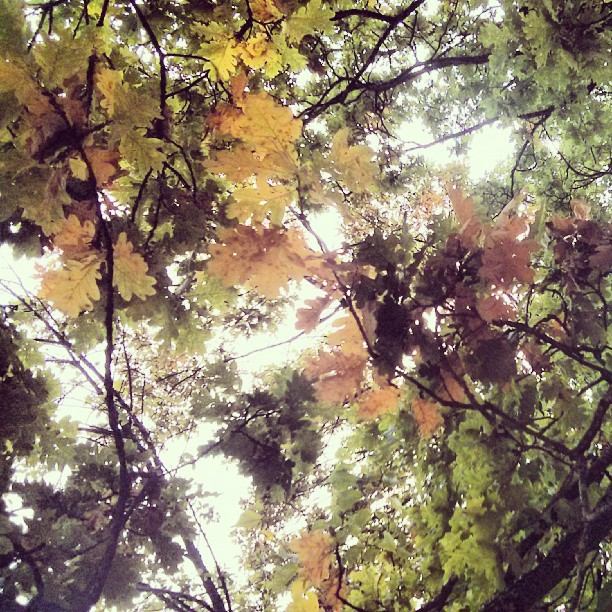 Himmel, träd och löv.