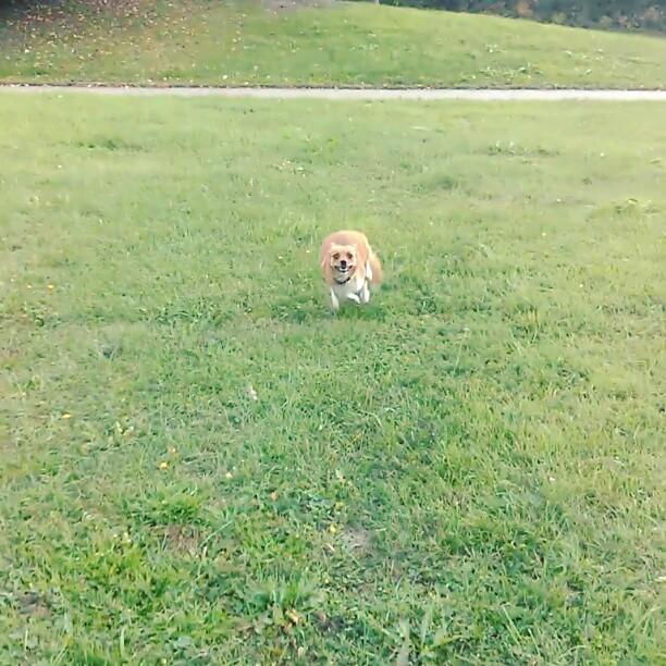 Springande glad hund.