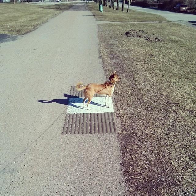 Jag vet inte vad rutan är till för, men det verkar hund veta. En hundparkering kanske?