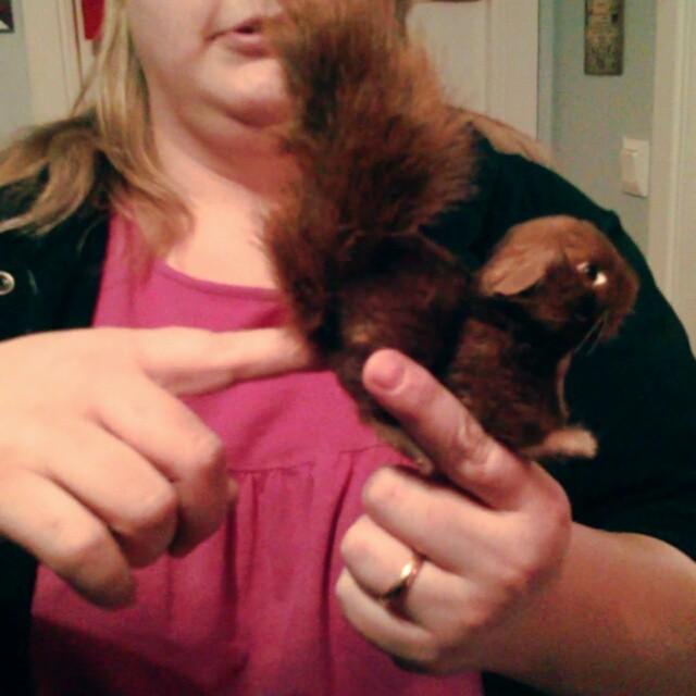 @slappo75 visar upp en sitt finger och en ekorre-fingerdocka. Den är brun. #squirrel #ass #finger