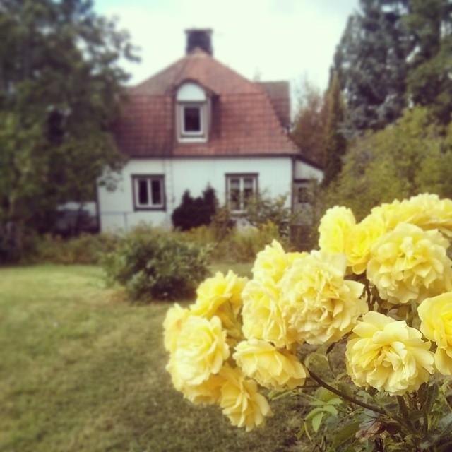 Rosor och hus.