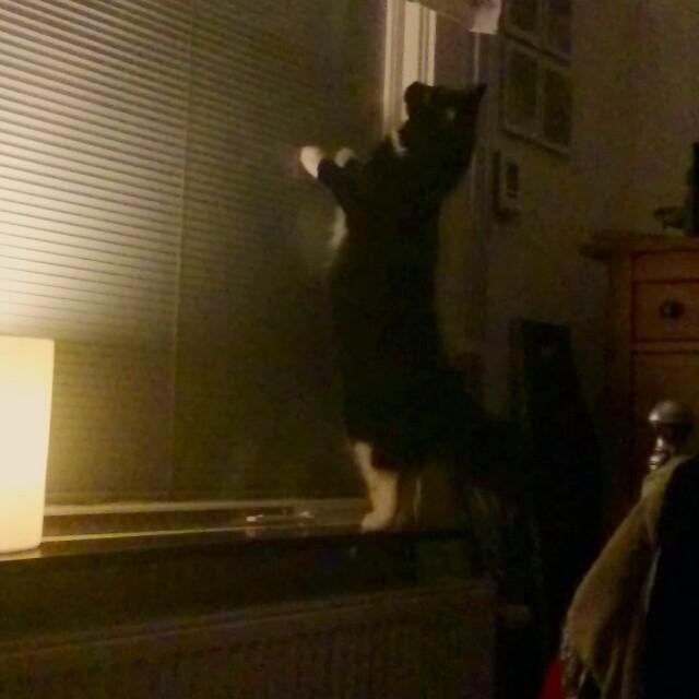 Amalia kollar att fönstret är stängt.