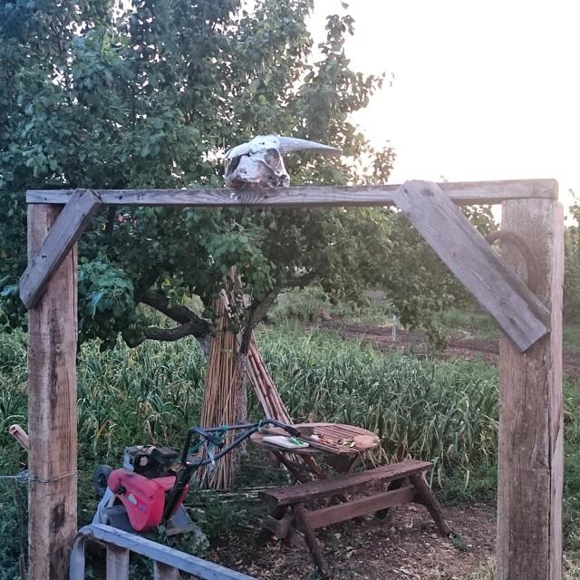Grannens entre till trädgårdslandet.
