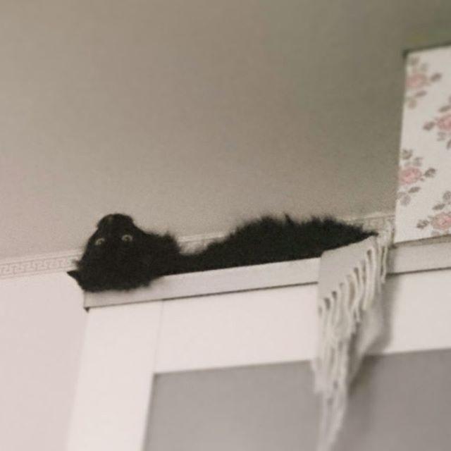 Amalia gillar att ligga på skåpet. Med huvud upp och ner.